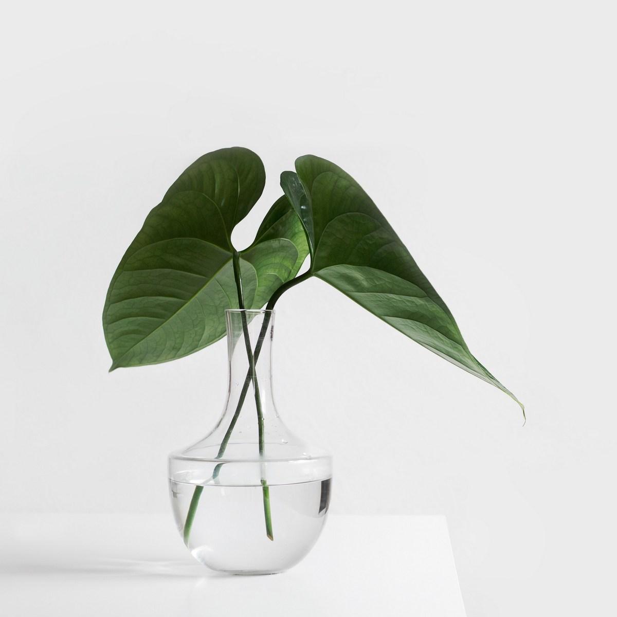 Plant afbeelding